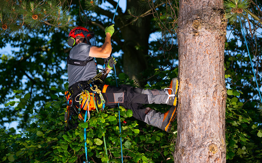 Baumpflege – Werkzeuge und erforderliche Schnitte