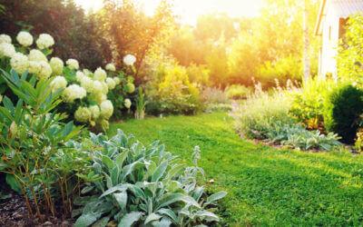 Pflanzen für Ihren Garten
