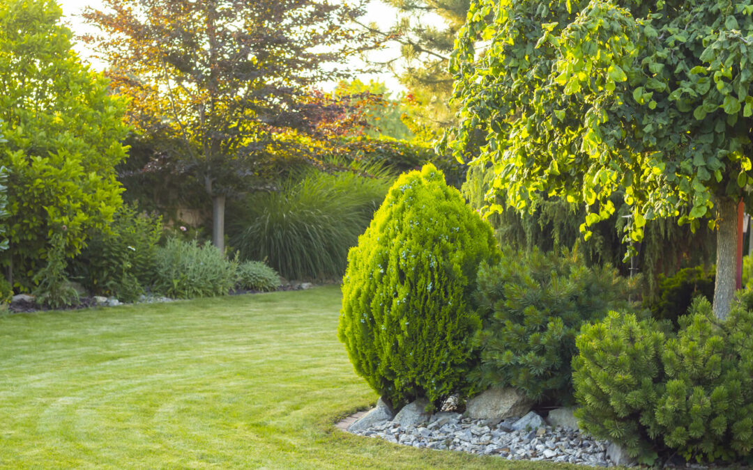 Worauf Sie bei Bäumen in Ihrem Garten achten müssen