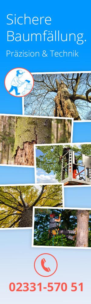 cleany Dienstleistung Baumfällung