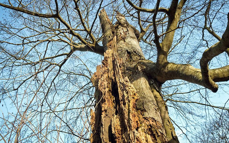 Sind Baumkontrollen Pflicht?